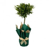 Give The Perfect Gift…. A Tree