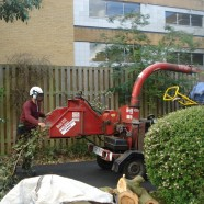 Tree Maintenance Contracting Services